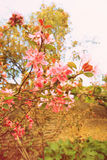 Beautiful macro flowers in retro style Stock Image