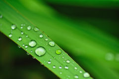 Water drops on the grass Royalty Free Stock Photography