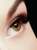 Beautiful macro shot of female eye with extreme long eyelashes and black liner makeup Royalty Free Stock Images