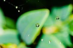 A beautiful macro shot of several morning raindrops Royalty Free Stock Photos