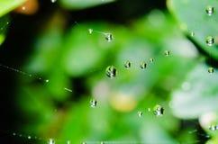 A beautiful macro shot of several morning raindrops Royalty Free Stock Images
