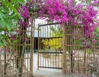 Beautiful magenta bougainvillea flowers Royalty Free Stock Photography