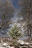 Beautiful magic Christmas tree. The magic of a beautiful young herringbone Stock Photos