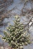 Beautiful magic Christmas tree. The magic of a beautiful young herringbone Stock Images