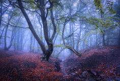 Beautiful magic forest in fog in autumn. Mysterious wood. Landscape Stock Image