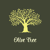 Beautiful magnificent olive tree Stock Photo