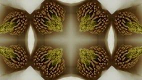 Beautiful magnolia bloom Kaleidoscope. stock footage