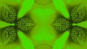 Beautiful magnolia bloom Kaleidoscope. stock video footage