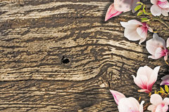 Beautiful magnolia blossoms stock images