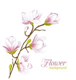 Beautiful Magnolia Branch, Exotic Flowers. Illustration Beautiful Magnolia Branch, Exotic Flowers. Summer and Spring Floral Background - Vector Stock Image