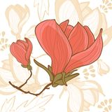 Beautiful magnolia flower Royalty Free Stock Image