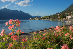 Beautiful malcesine lakeside promenade with blooming roses. Beautiful malcesine lakeside promenade garda lake with blooming roses and view to the old town royalty free stock images