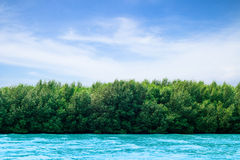 Beautiful mangrove day. Mangrove beautiful afternoon in summer stock illustration