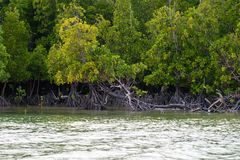 Coastal line with mangrove shrubs Royalty Free Stock Images