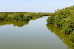 Beautiful mangrove and sea landscape at Coyo Cocco Royalty Free Stock Images
