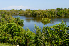 Beautiful mangrove and sea landscape at Coyo Cocco Stock Image
