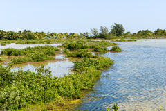 Beautiful mangrove and sea landscape at Coyo Cocco Royalty Free Stock Photography