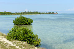 Beautiful mangrove and sea landscape at Coyo Cocco Stock Images