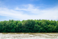 Beautiful mangrove,Thailand. Beautiful mangrove at Bangpu Recreation Center,Thailand stock images