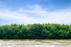 Beautiful mangrove,Thailand. Beautiful mangrove at Bangpu Recreation Center,Thailand Stock Images