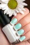 Beautiful manicure. Stock Images