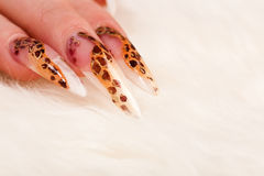 Beautiful manicure with leopard spots Stock Image
