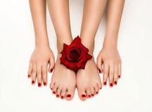 Beautiful manicure and pedicure with a rose royalty free stock photography