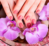 Beautiful Manicure and Pedicure in spa salon. Royalty Free Stock Photo