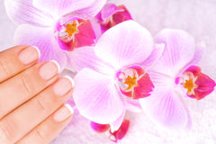 Beautiful manicure with pink orchid on the white Stock Photo