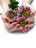 Beautiful manicured hands with purple flowers Stock Images