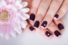 Beautiful manicured nails Royalty Free Stock Image