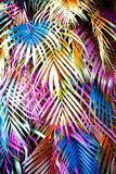 Beautiful palm leaves royalty free stock photos