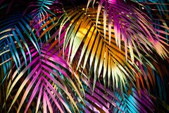 Beautiful palm leaves royalty free stock images