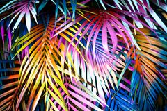 Beautiful palm leaves royalty free stock image