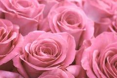 Beautiful many roses flowers background for wedding scene vintage style tone Stock Photos