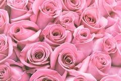 Beautiful many roses flowers background for wedding scene vintage style tone. Royalty Free Stock Photos