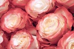 Beautiful many roses flowers background for wedding scene vintage style tone. Stock Photos