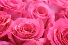 Beautiful many roses flowers background for wedding scene vintage style tone. Royalty Free Stock Photography