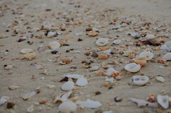 Beautiful of many shells on sand the beach Stock Photos