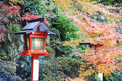 Beautiful maple in Japan royalty free stock image