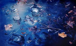 Beautiful maple leaves in frozen blue water. Winter Ice pieces and maple leaves in frozen blue water Stock Images