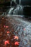 Beautiful maple leaves on waterfal Stock Photo