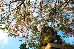 Beautiful maple place, Taiwan Royalty Free Stock Photography