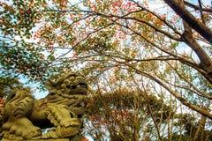 Beautiful maple place, Taiwan Stock Photos