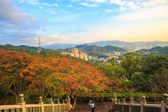 Beautiful maple place, Taiwan Royalty Free Stock Image