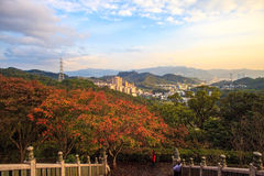 Beautiful maple place, Taiwan Stock Photo