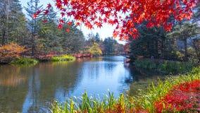 Beautiful maple season at Kumoba Pond, Karuizawa, Japan Stock Images