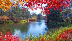 Beautiful maple season at Kumoba Pond, Karuizawa, Japan Royalty Free Stock Images