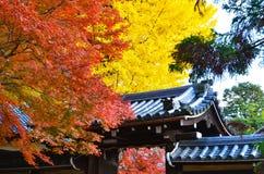 Beautiful Maples Stock Image
