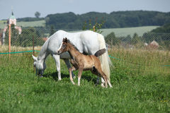 Beautiful mare with foal stock photography